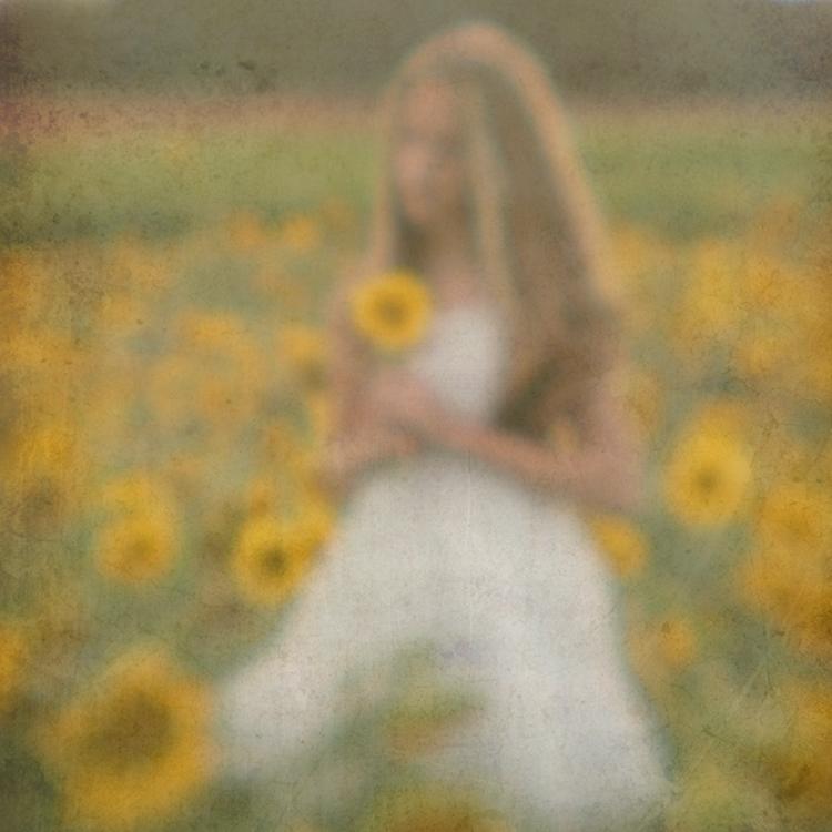 Sunflower fieldweb